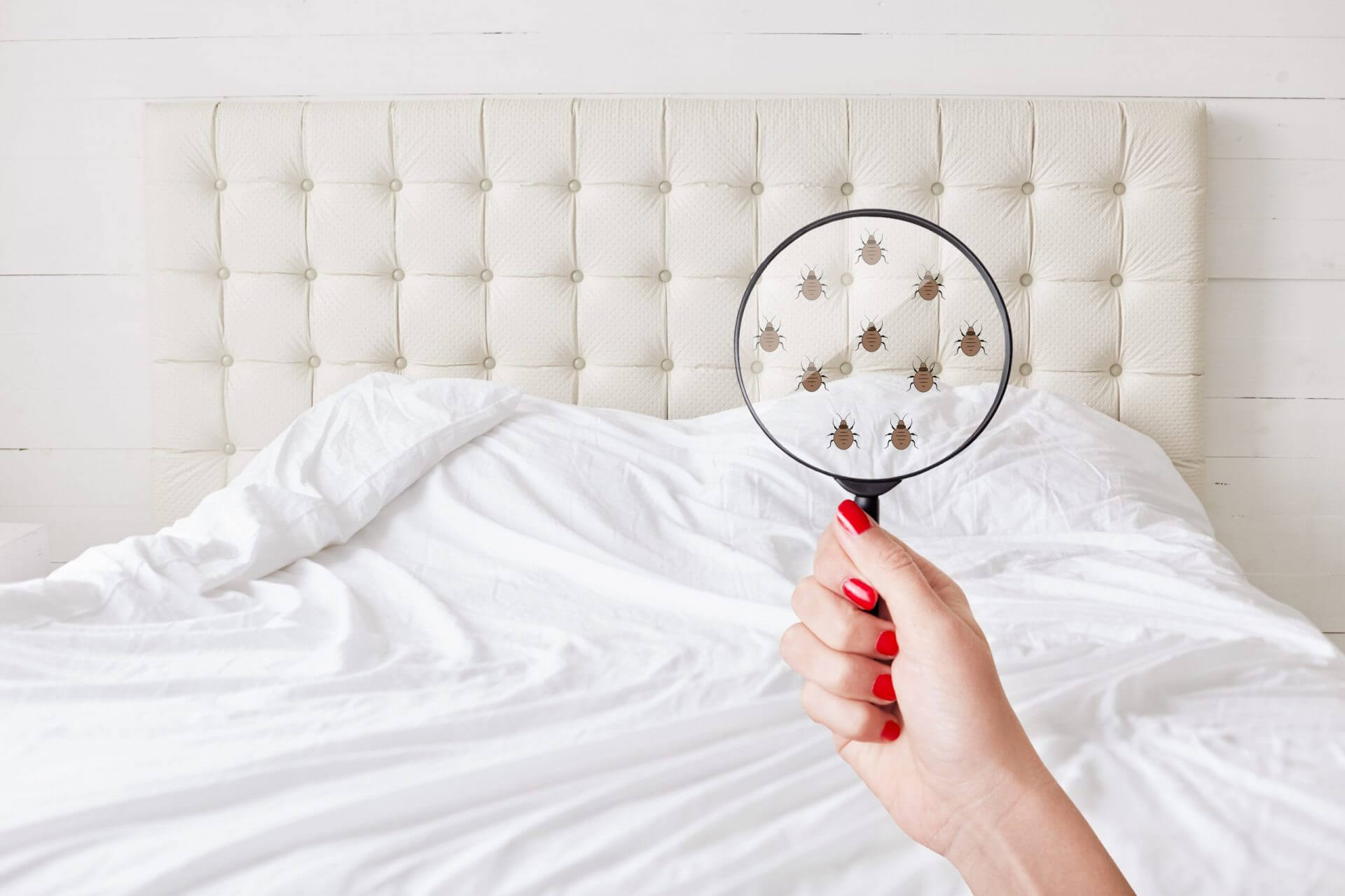 You shouldn't have to share your bed withtiny bugs.