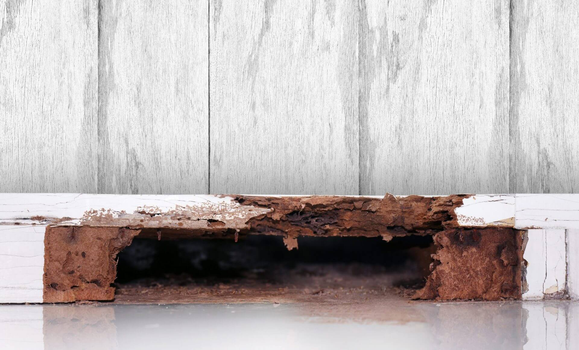Don't let your home become a three-course meal for termites.